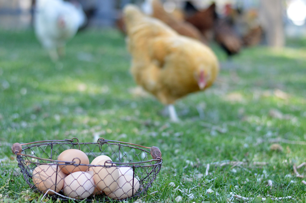 Unscrambling the Confusion on Eggs